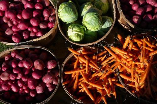 tunbridge-hill-farm-vegetables
