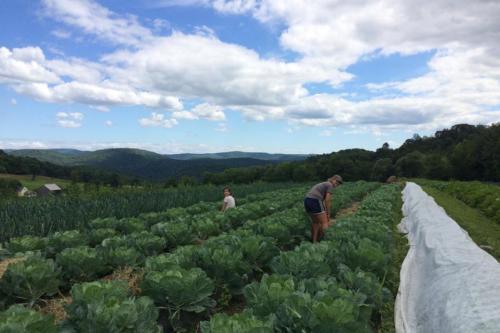 tunbridge-hill-farm-vt-007